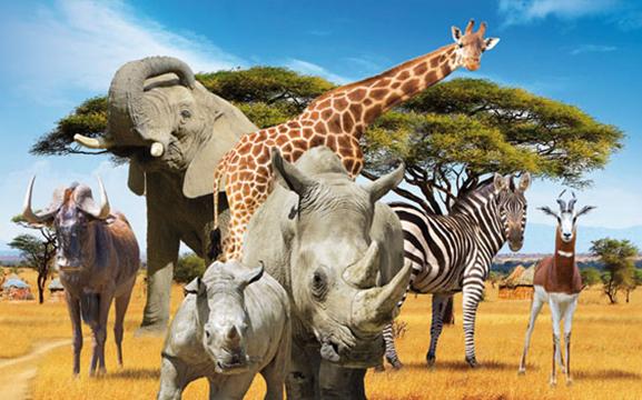 safari-de-peaugres